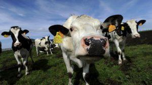mlecna-krize